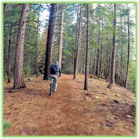 Biking around Lake Siskiyou - California - Epic Trip Adventures