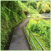 Akaka Falls State Park - Hawaii Big Island - Epic Trip Adventures