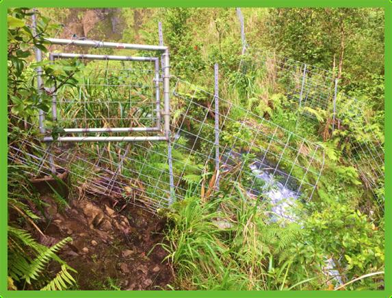 The Blue Hole - Kauai - Epic Trip Adventures