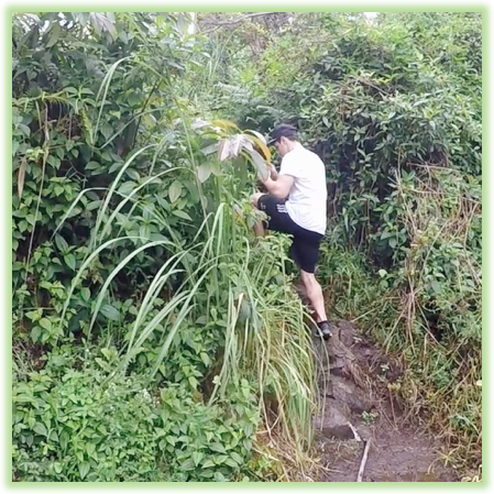 Searching For Narnia Hike - Hawaii Big Island - Epic Trip Adventures