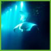 Snorkeling with the Mantas - Hawaii Big Island - Epic Trip Adventures